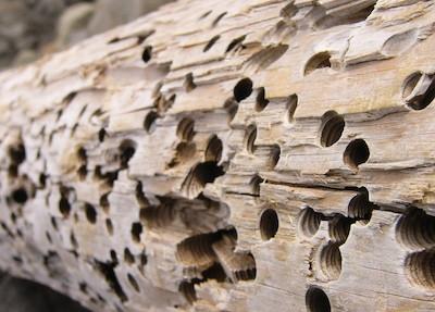 от чего нужно защищать древесину